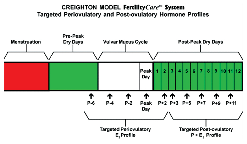 Figure 1: This schematic drawing of the Creighton Model FertilityCare System demonstrates how it is used to target the periovulatory and postovulatory hormone profiles